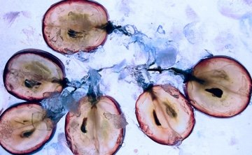 My Pure Skin Blog Vertus Therapeutiques Pepins Raisins